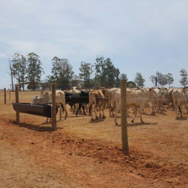 Farms_BrazilKurt_4