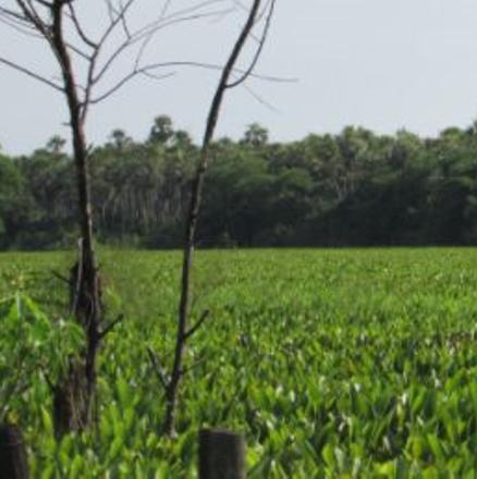 Farms_ParaguaySM_4