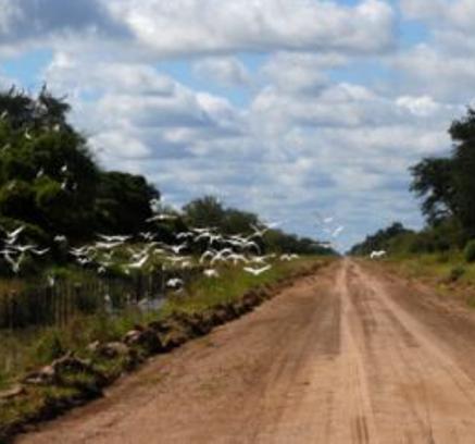 Farms_ParaguaySM_3