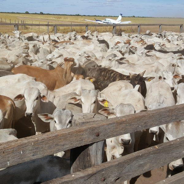 Farms_Brazil_4