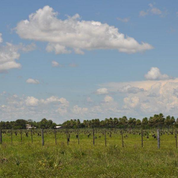 Farms_Paraguay_5